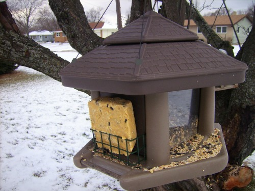 Copycat Birdola - how to make your own birdseed cakes