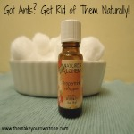 5 Natural Ways to Get Rid of Ants In The House