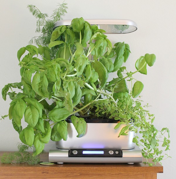 How to dry herbs from the fresh herbs in your AeroGarden