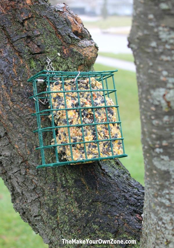 Homemade bird seed suet cakes