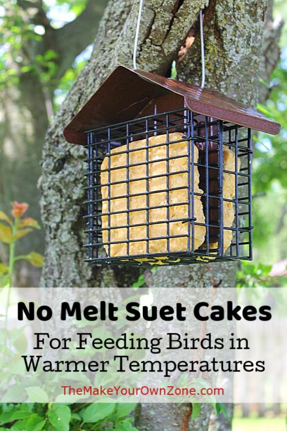 No Melt Suet Cakes in a tree