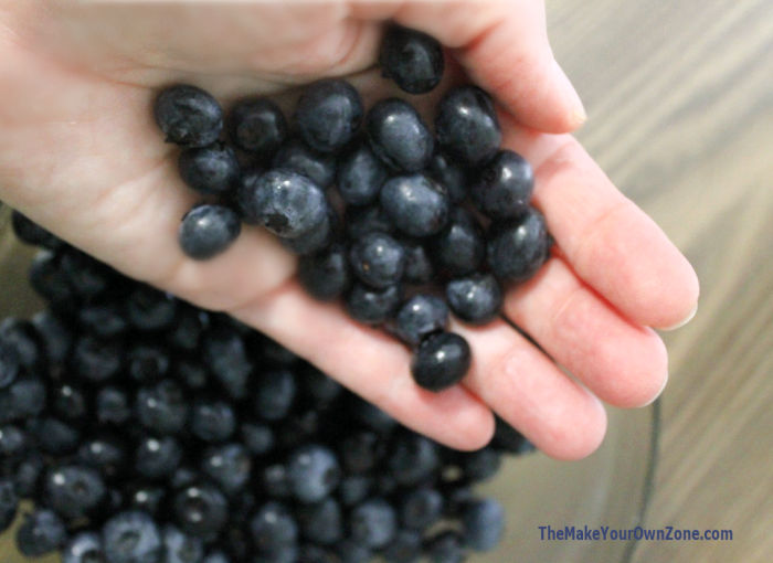 A handful of fresh picked blueberries